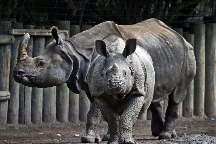 rhino-monica