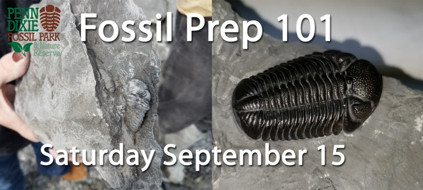 Fossil Prep 101
