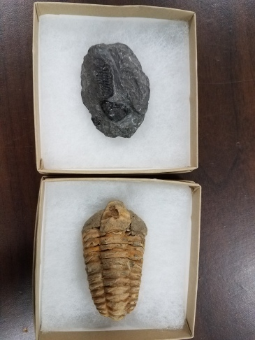 fossil prizes
