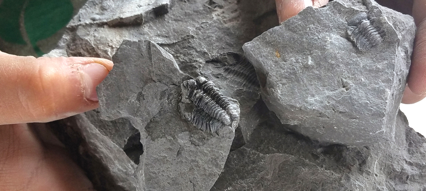 Traveling Fossils