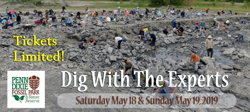 May 2019: Dig With TheExperts