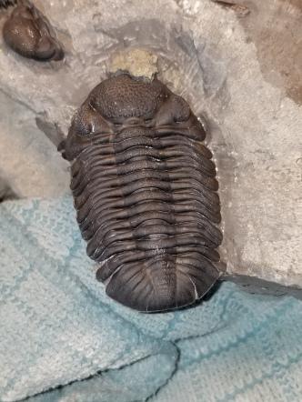 Jimmy's eyecatching trilobite!
