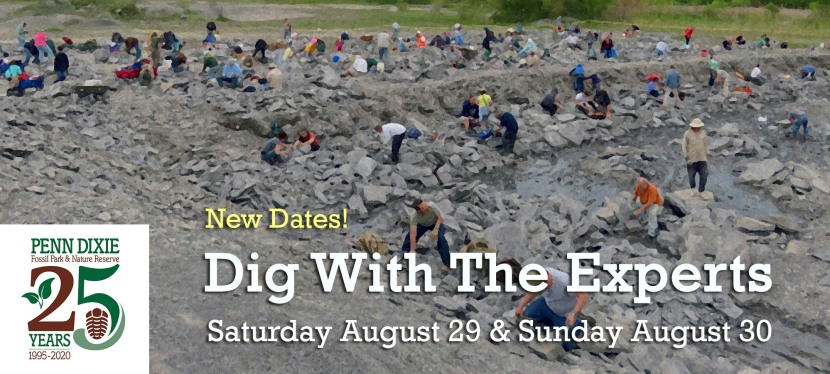 Dig With The Experts