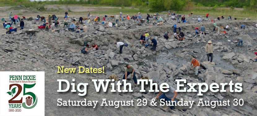 Dig With TheExperts